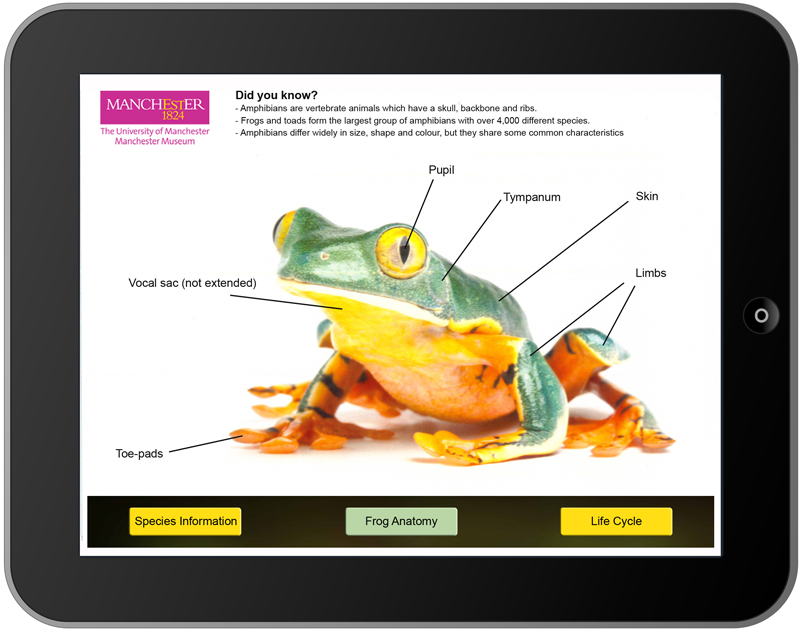 Fabulous Frogs App: Splendid & Native