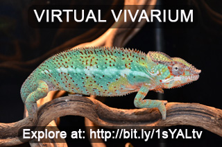 Virtual Vivarium Sticker