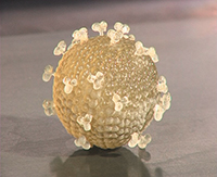 This model of the HIV was printed on the Object Eden 3D printer